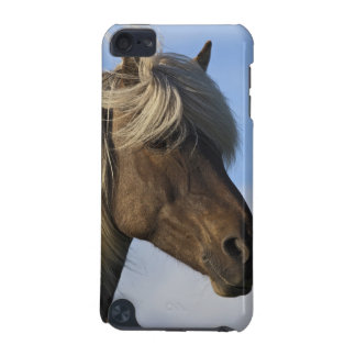 Head of Icelandic horse, Iceland iPod Touch (5th Generation) Covers