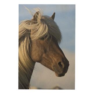 Head of Icelandic horse, Iceland Wood Wall Decor