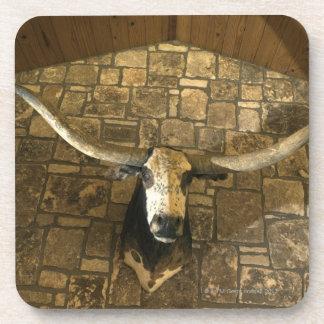 Head of longhorn steer mounted on wall drink coasters