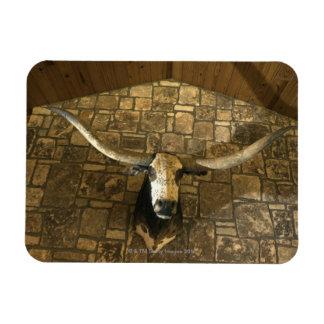 Head of longhorn steer mounted on wall magnet