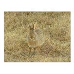 Head On Bunny Postcard