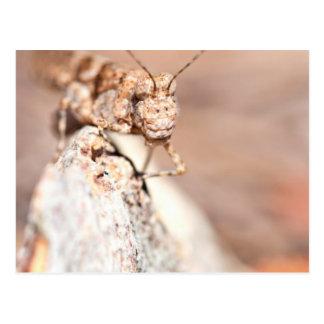 Head On Grasshopper Postcard