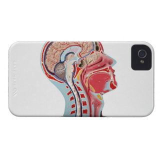 Head Section Model iPhone 4 Covers