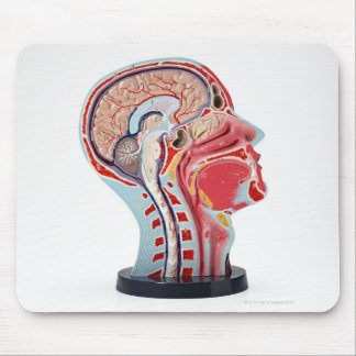 Head Section Model Mouse Mat