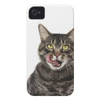 Head shot of a male domestic tabby cat licking Case-Mate iPhone 4 case