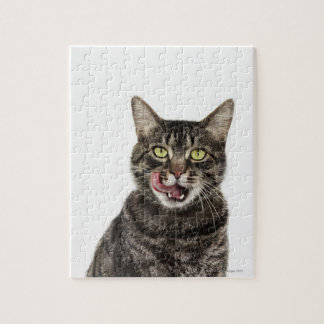 Head shot of a male domestic tabby cat licking jigsaw puzzle