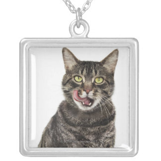 Head shot of a male domestic tabby cat licking silver plated necklace