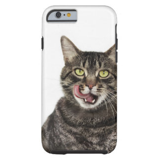 Head shot of a male domestic tabby cat licking tough iPhone 6 case