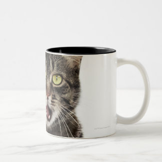 Head shot of a male domestic tabby cat licking Two-Tone coffee mug
