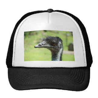 Head` Shot Of An Emus At Zoo Of Auckland Hat