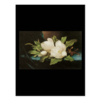 Heade Giant Magnolias Postcard