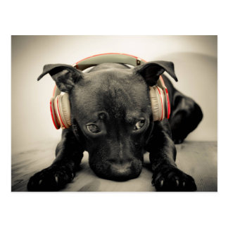 Headphones on a Black Puppy Postcard