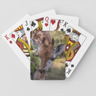 Headshot of a Giraffe Playing Cards