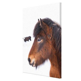 Headshot of Brown Icelandic Horse Canvas Print