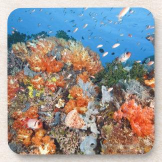 Healthy reef structure, Komodo National Park Beverage Coasters