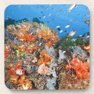 Healthy reef structure, Komodo National Park Coaster