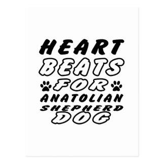 Heart Beats For Anatolian Shepherd Postcards