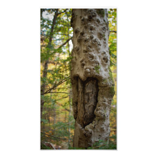 Heart Carved Tree Photo Print