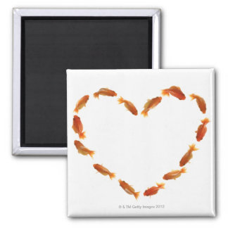 Heart made with goldfishes square magnet