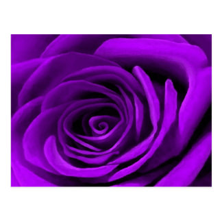 Heart Of A Purple Rose Postcard