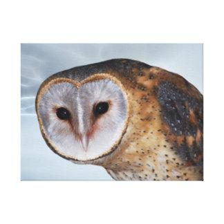 Heart shaped face Barn Owl Canvas Print