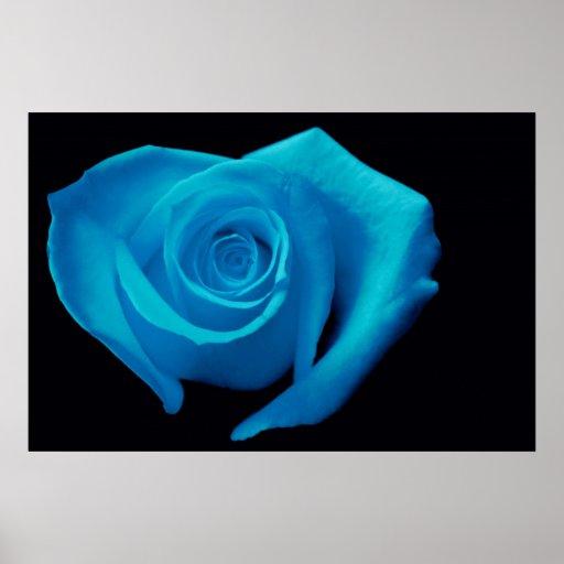 Heart Shaped Rose, Aqua Poster