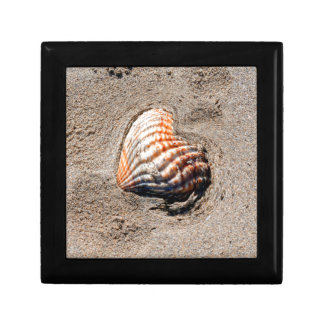 heart shells on the beach small square gift box