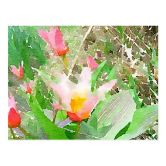 Heart's Delight Kaufmanniana Tulip in Watercolors Postcard