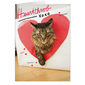 Heartthrob Cat Card