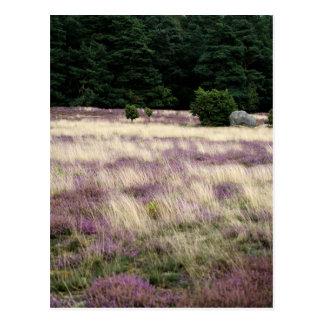 Heathland with Forest Postcard