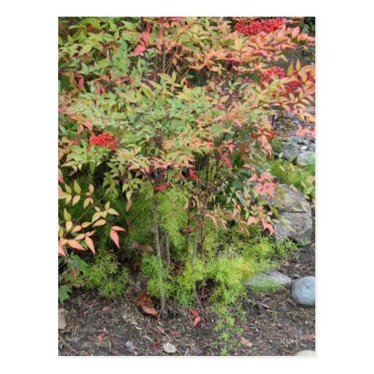 Heavenly Bamboo and Asparagus Fern Postcard