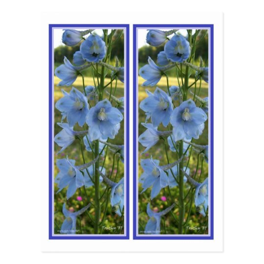 HEAVENLY BLUE BOOKMARKS POSTCARD