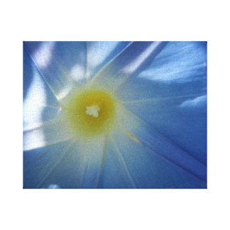 Heavenly Blue Morning Glory Gallery Wrapped Canvas
