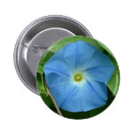 Heavenly Blue Morning Glory Pinback Buttons