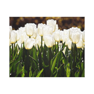 Heavenly Tulips Canvas Print