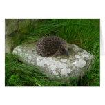"""Hedgehog (13)"" Card"