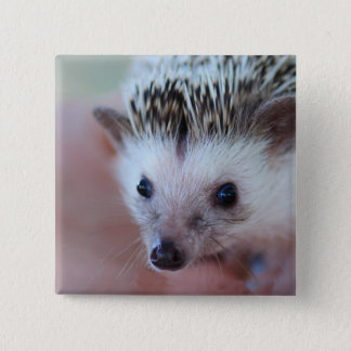 hedgehog 15 cm square badge