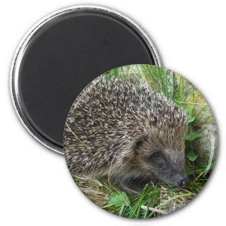 Hedgehog (1) Magnet