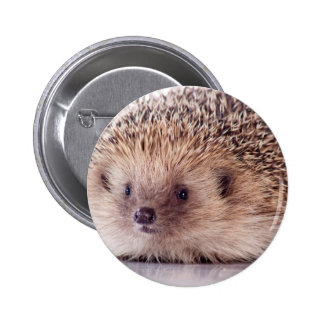 Hedgehog, 6 Cm Round Badge