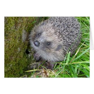 """Hedgehog (7)"" Card"