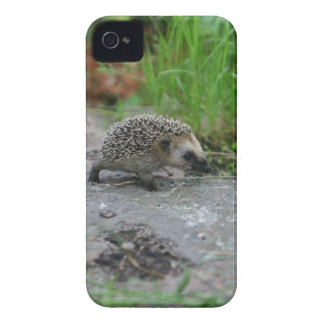 Hedgehog Blackberry Bold case