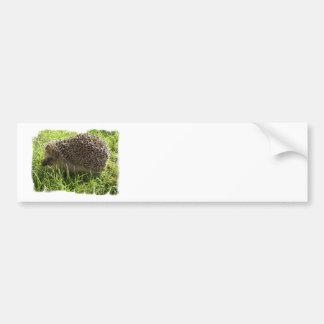 Hedgehog Bumper Stickers