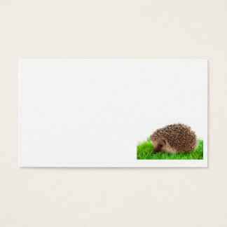 hedgehog business card