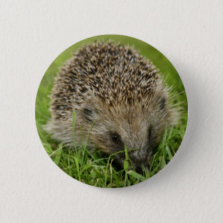 Hedgehog Button Badge