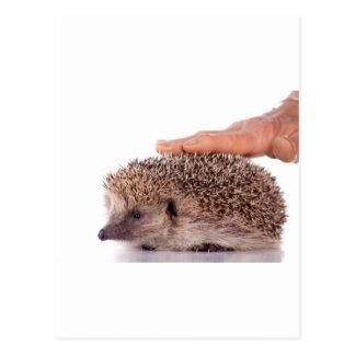 Hedgehog Carte Postale