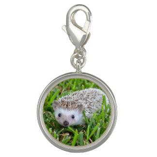 Hedgehog Charm