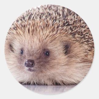 Hedgehog, Classic Round Sticker