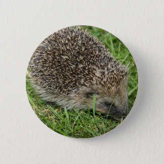 Hedgehog Close-up Magnet 6 Cm Round Badge