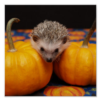 Hedgehog Halloween Greetings Poster