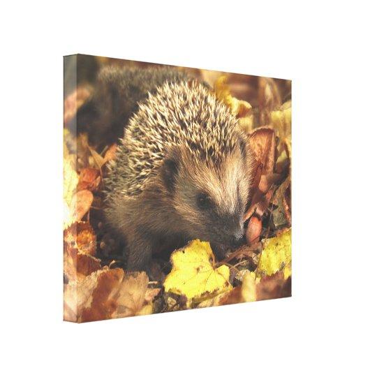 Hedgehog In Autumn Canvas Print